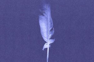 a white feather and purple background